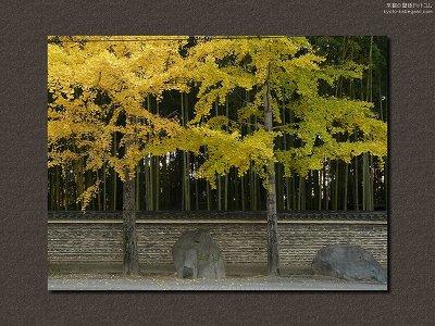 今宮神社11【ダウンロードする場合は右の画像サイズをクリックしてください】