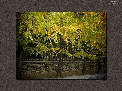 今宮神社12【ダウンロードする場合は右の画像サイズをクリックしてください】