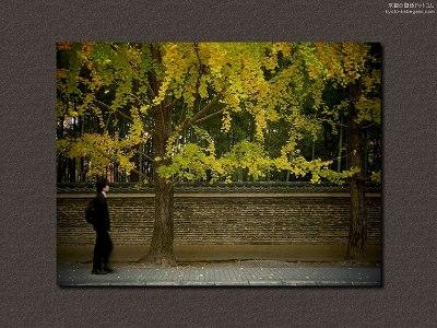 今宮神社13【ダウンロードする場合は右の画像サイズをクリックしてください】