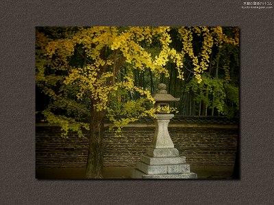 今宮神社14【ダウンロードする場合は右の画像サイズをクリックしてください】